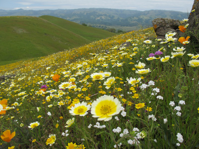 plant biodiversity flower meadow