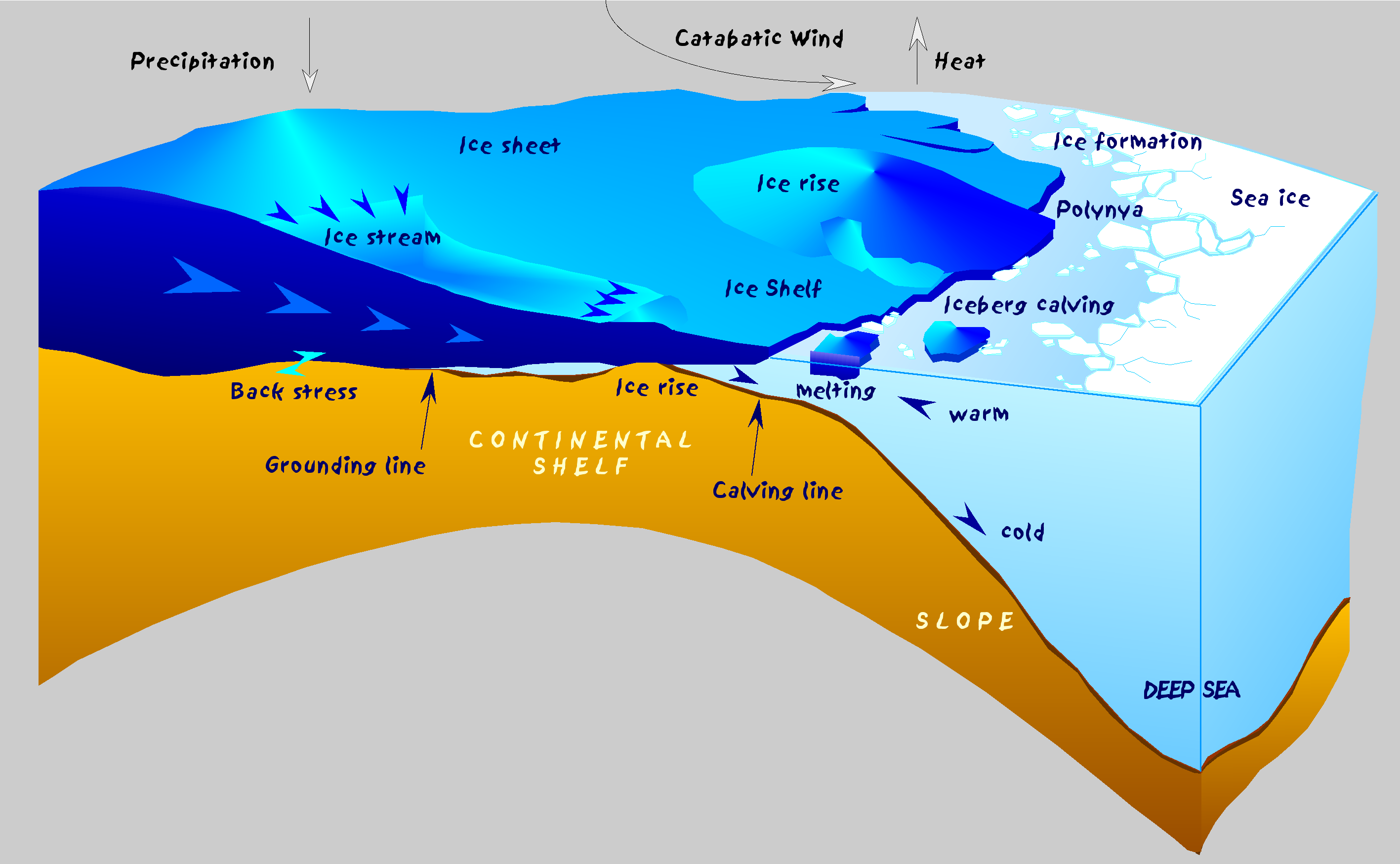 Antarctic ice sheet and ice shelf dynamics