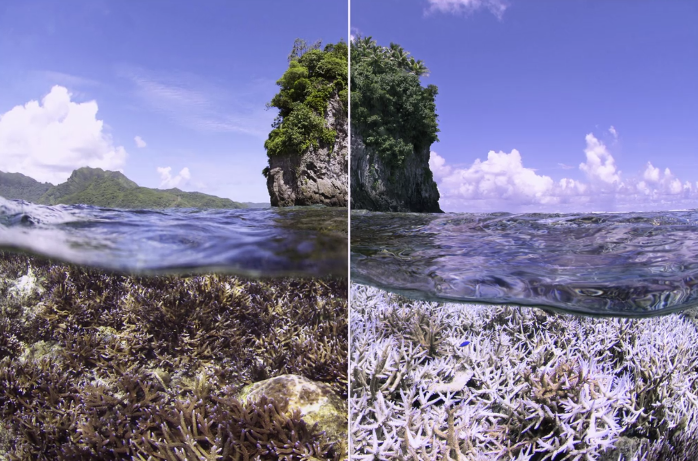 Coral bleaching event captured in climate documentary Chasing Coral