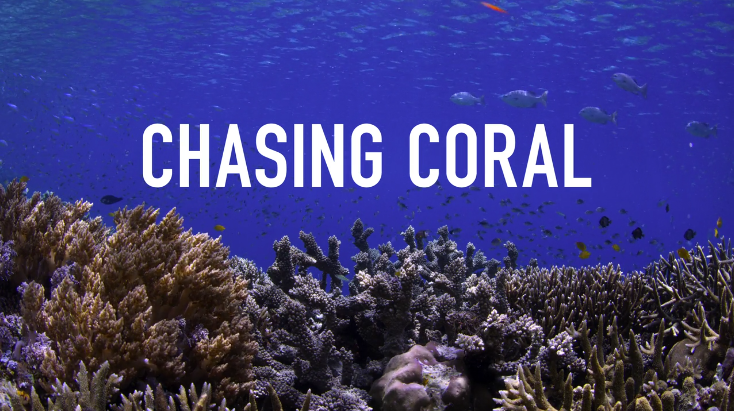 Climate documentary Chasing Coral review & fact check: go watch that movie!