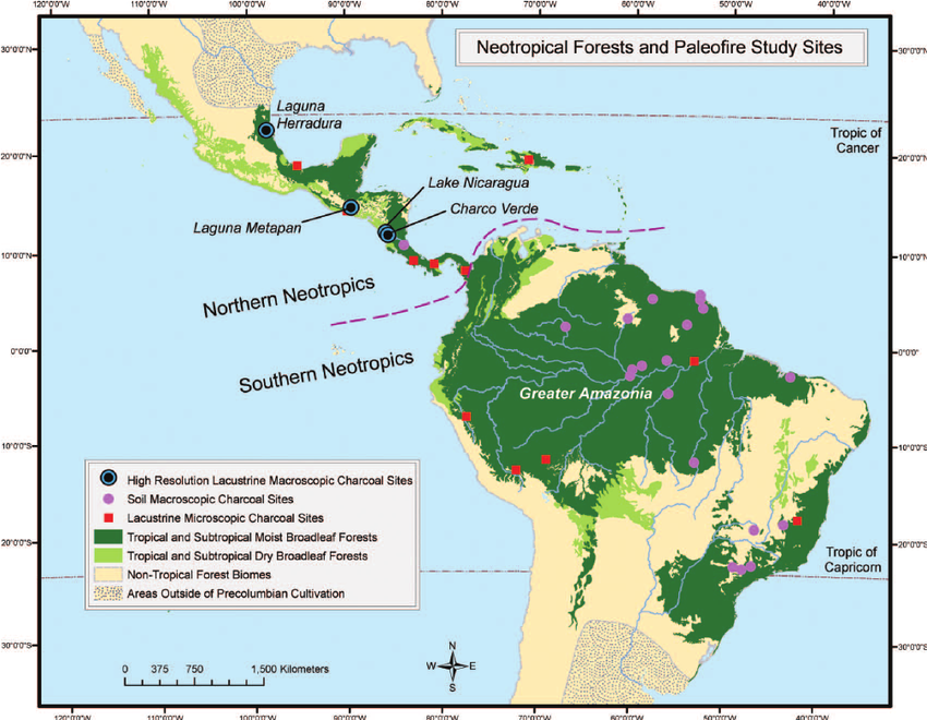 Rainforest in neotropics biogeographical realm