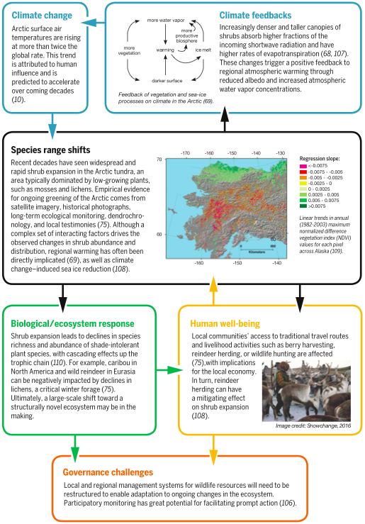 Climate change-driven species migration activates feedbacks on ecosystem health, human wellbeing - and climate change