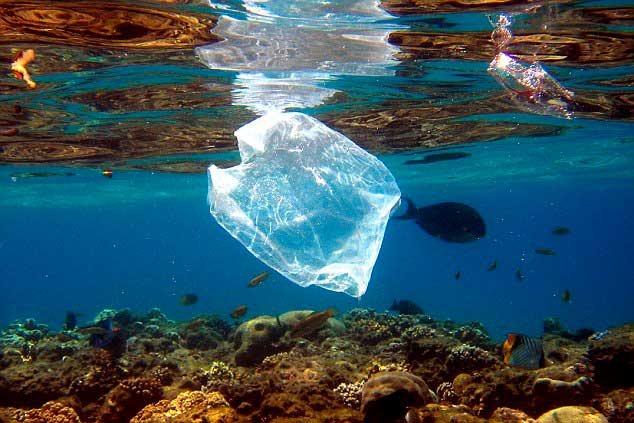 By 2050 there will be more plastic than fish in the oceans - World Economic Forum states