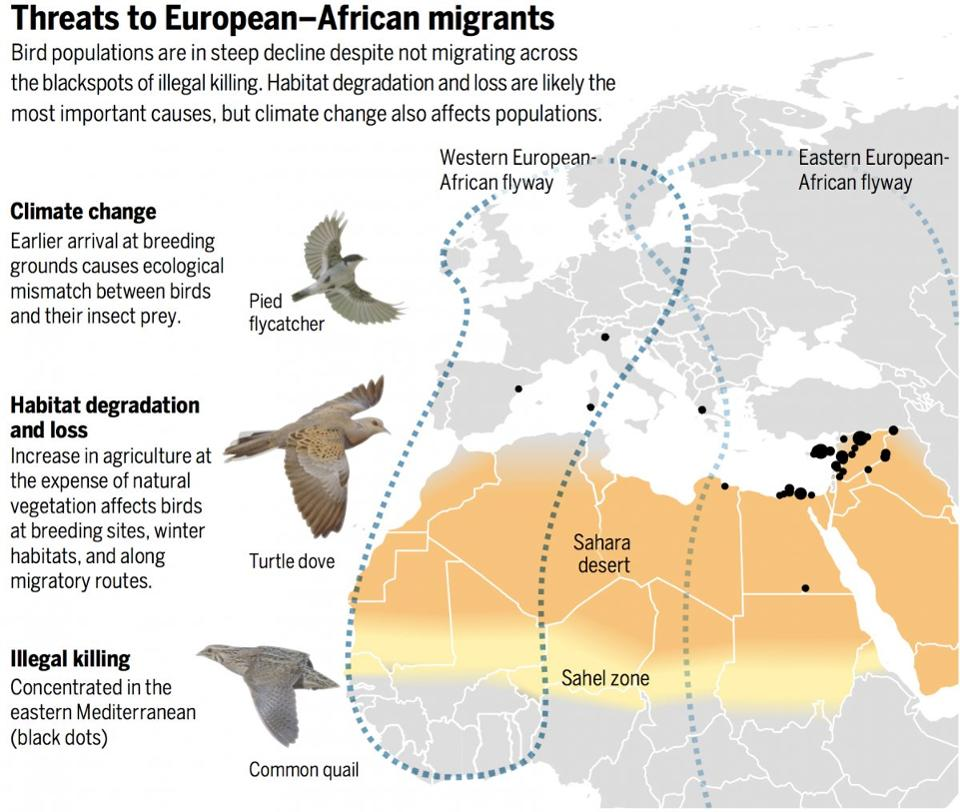 Climate change affects migratory birds between Europe and Africa