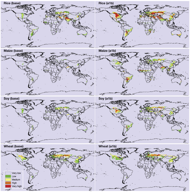 Heat stress damage from climate change for 4 global food staples