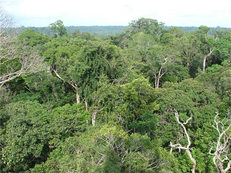 climate change biodiversity Amazon rainforest
