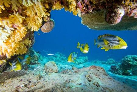 climate migration ocean species