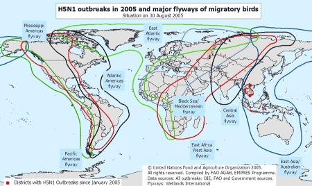 Flu pandemic La Niña bird migration routes