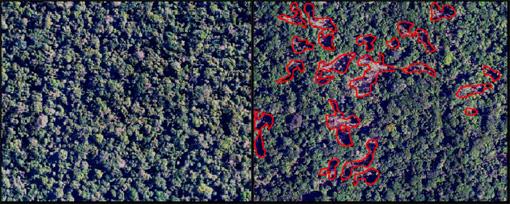 forest selective logging