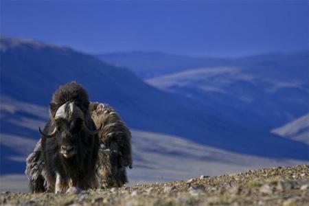 megafauna extinction after last ice age