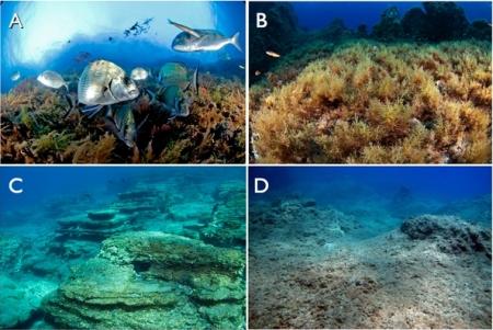Mediterranean biodiversity ecosystems